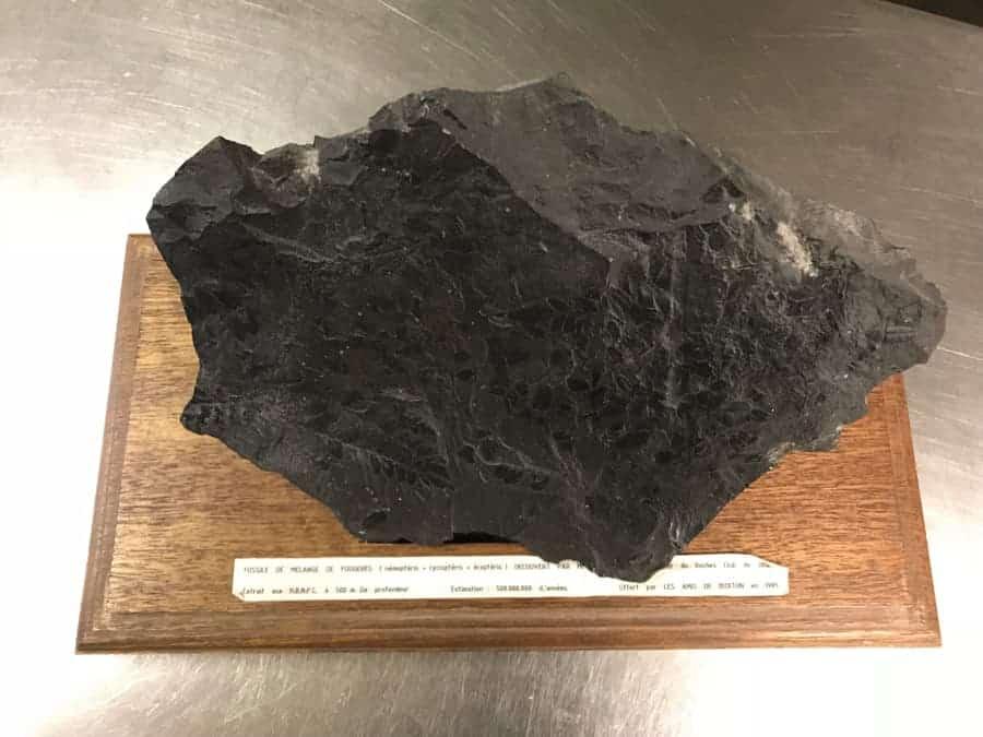 Coal Fossel